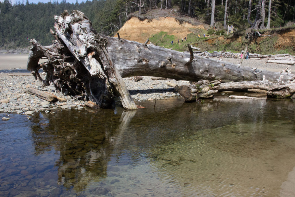 The Best One-Mile Hike In Oregon – Short Sand Beach Trail Oswald West State Park Great Travel Great Stories by Steven Shomler