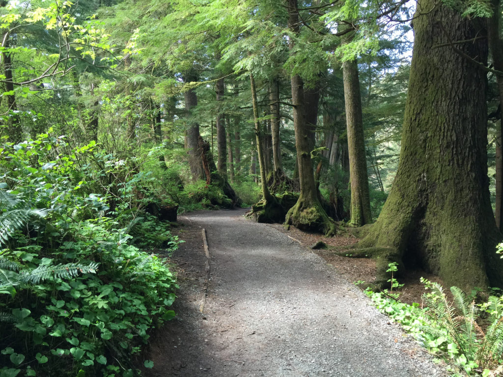 The Best One-Mile Hike In Oregon – Short Sand Beach Trail Oswald West State Park