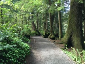 The Best One-Mile Hike In Oregon – Short Sand Beach Trail Oswald West State Park Steven Shomler